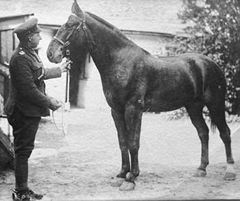 Hector McLarty with his horse in WW1